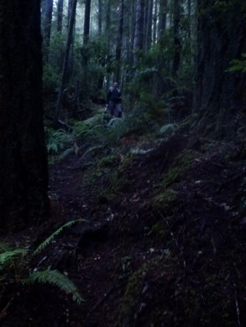 Sarah standing on a steep path surrounded by ferns and trees