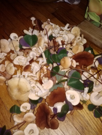 a pile of various mushrooms and redwood sorrel on a table