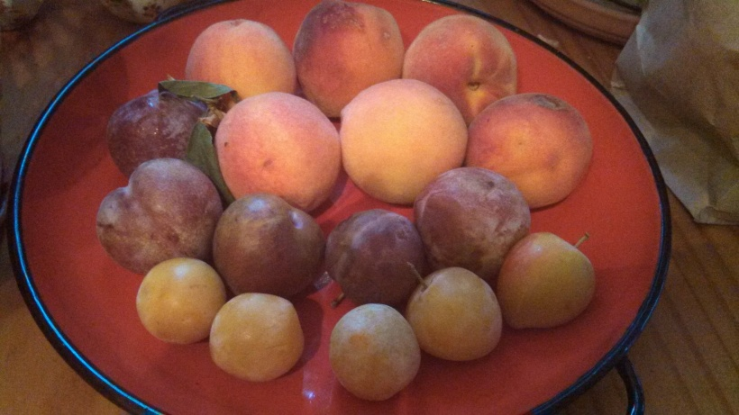 Stone fruit bowl