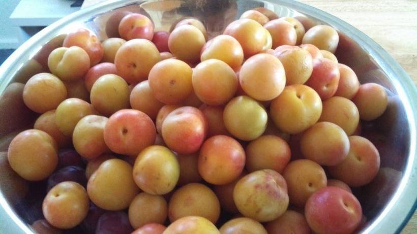 Mendocino plums