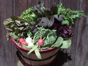 Live Power Community Farm CSA
