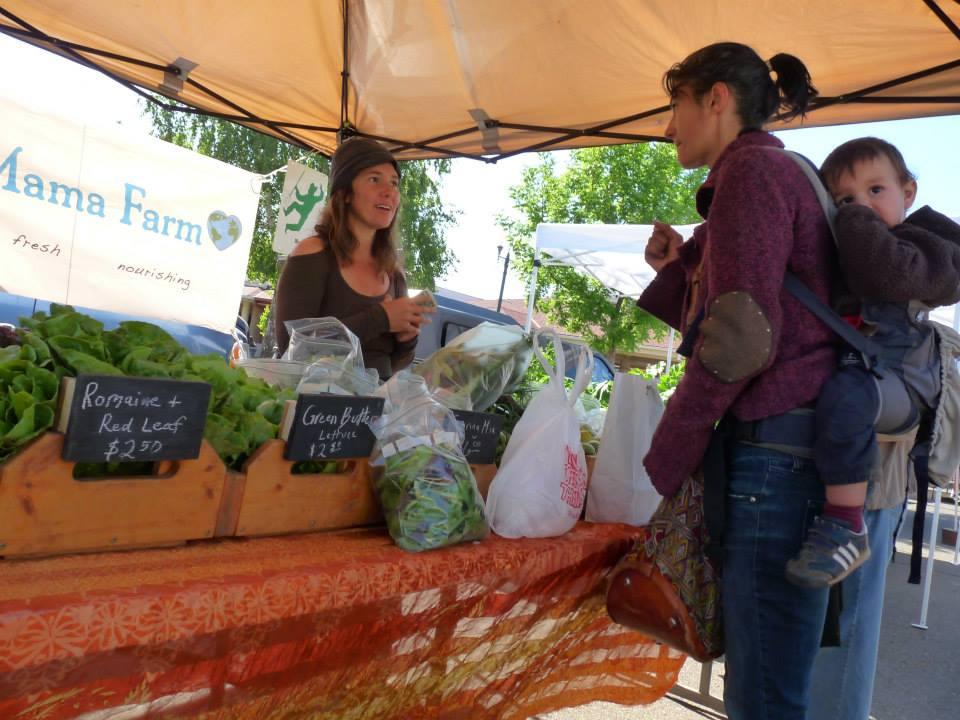 Shopping at the Ukiah Farmers' Market